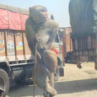 Monkeying around - an encounter during the journey