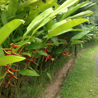 Birds of Paradise - one of the variety of flowers found there