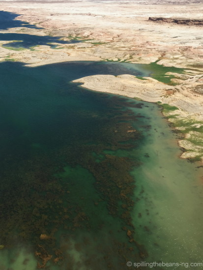 Algae on Lake Mead